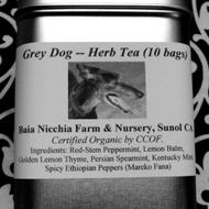 Grey Dog from Baia Nicchia Farm
