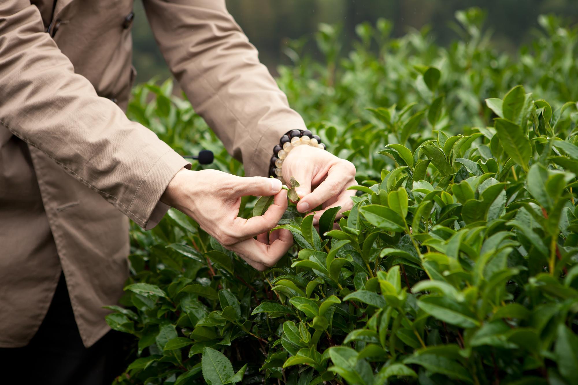 お湯を落とすと溢れ出てくる中国茶の世界をご堪能下さい。