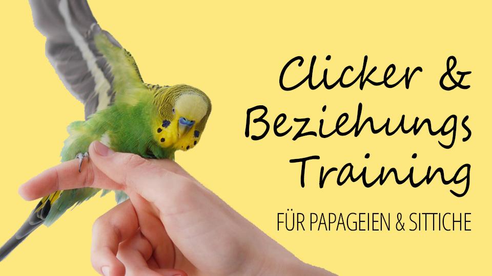 Clicker- & Beziehungstraining für Papageien & Sittiche