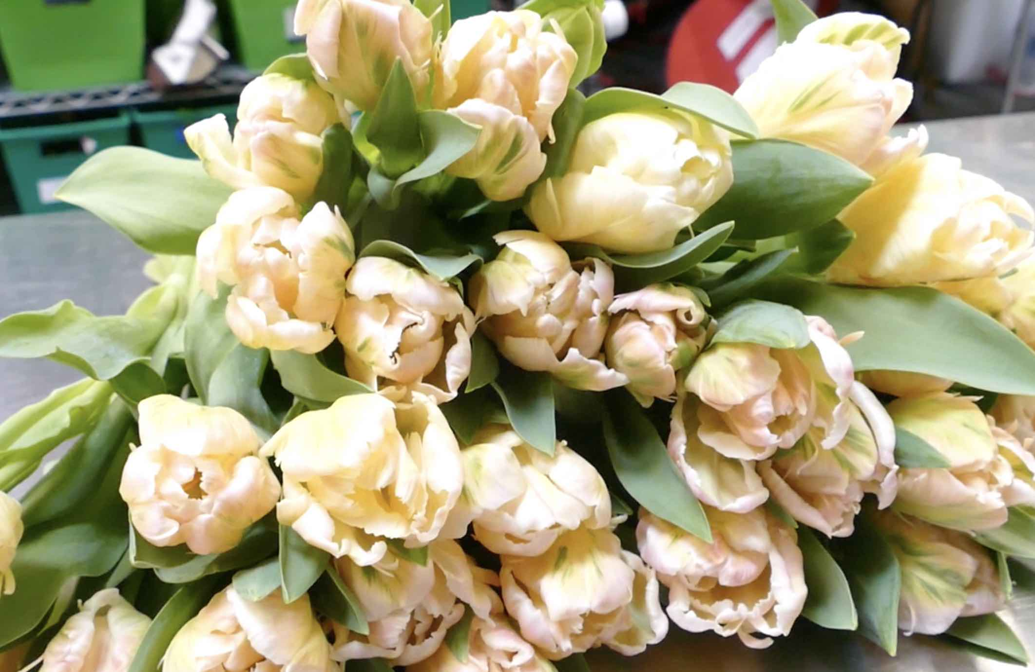 Parrot Tulips are fantastic additions to this week's design.