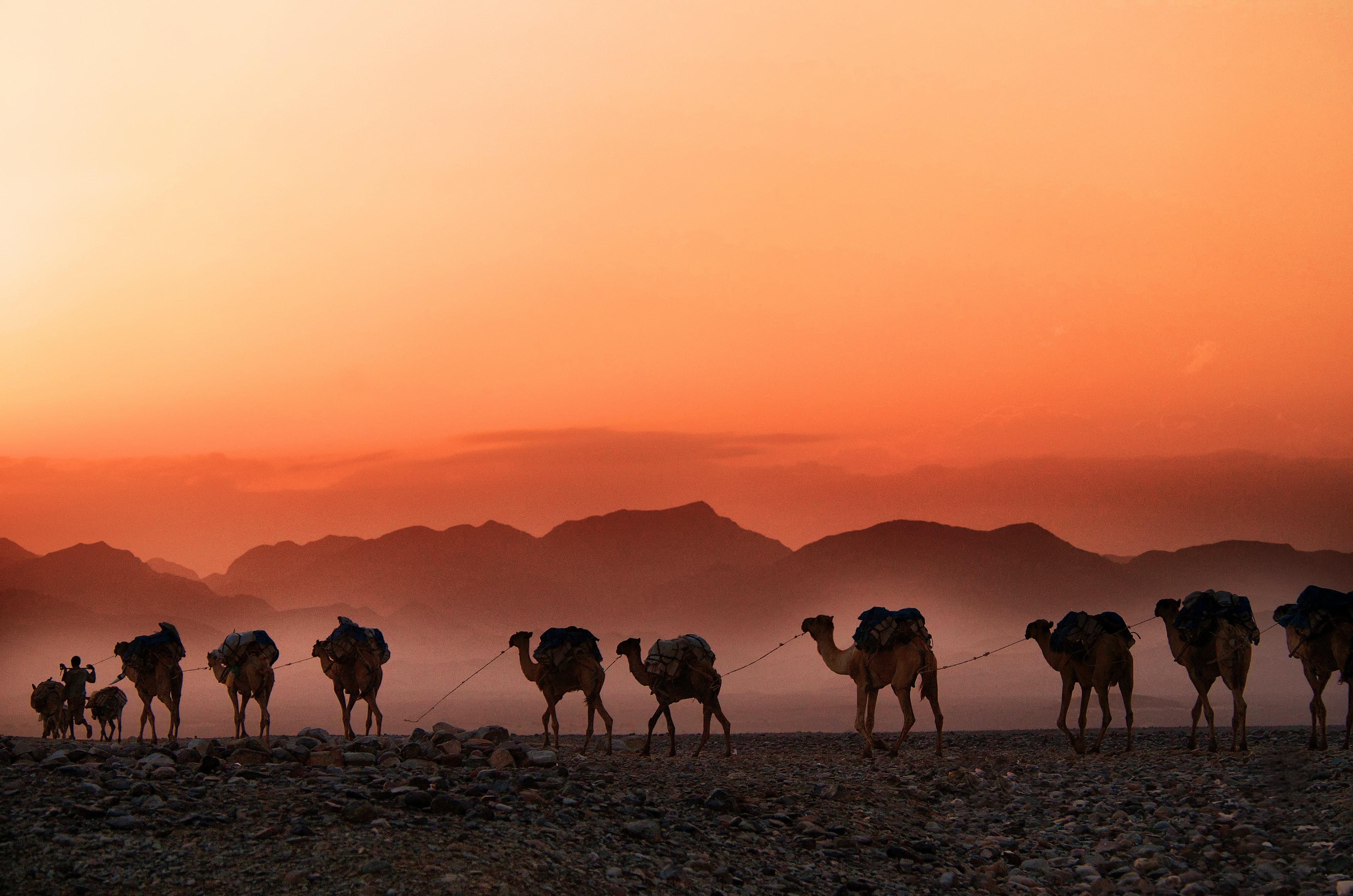 A caravan of camels at sunset - Goal Success Program