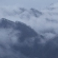 Darjeeling Monteviot Organic First Flush 2011 from Grey's Teas