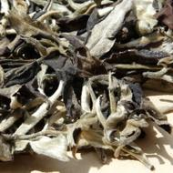 Yue Guang Bai from Yunnan Sourcing