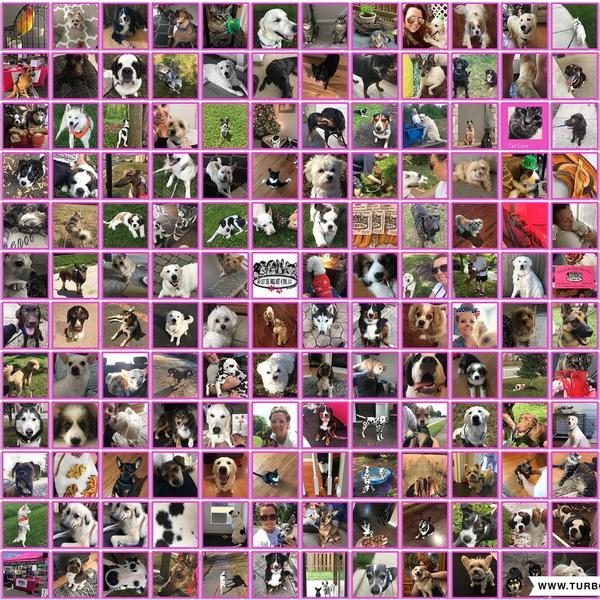 ITS_OUR_1_YEAR_ANNIVERSARY__1_year_ago_today_I_decided_to_take_a_leap_of_faith_and_open_We_Let_the_Dogs_Out_4_You_a_Pet_comjpg
