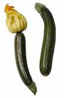 Courgette with flower and without