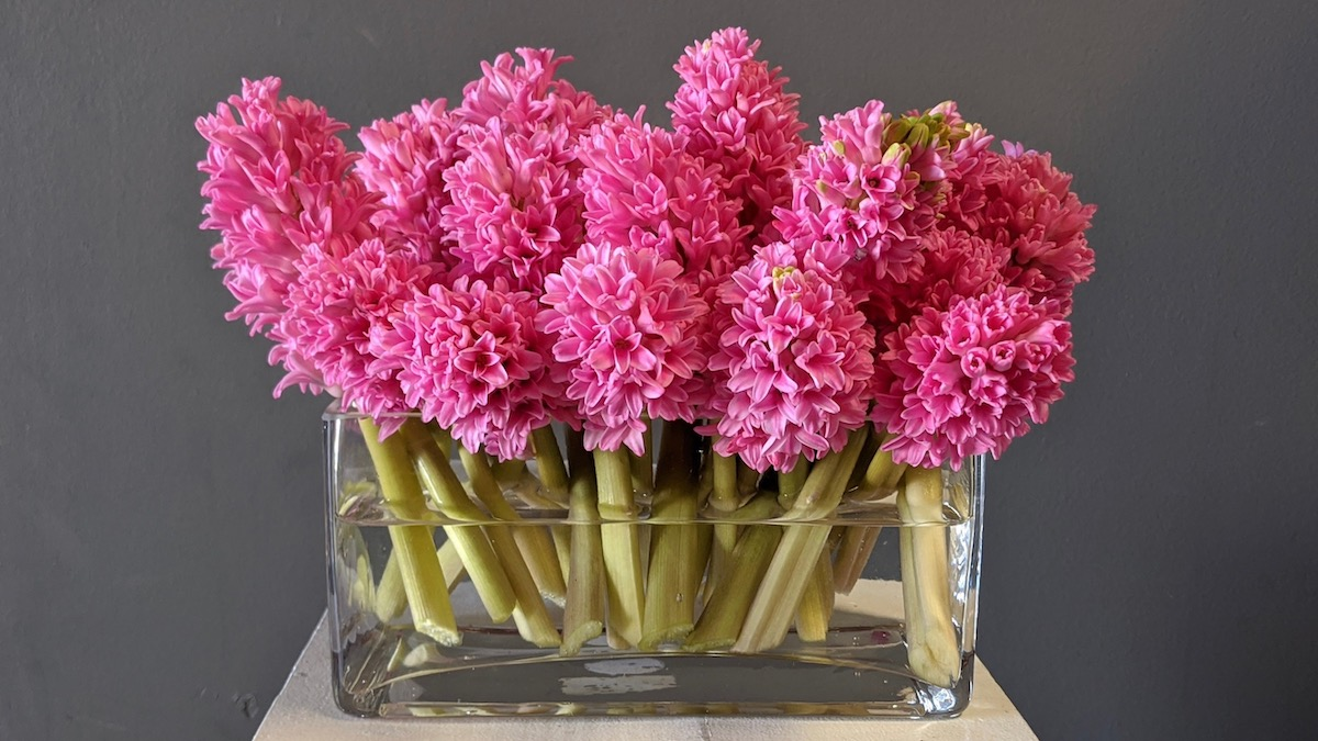 Flower Fridays: Simply Pink