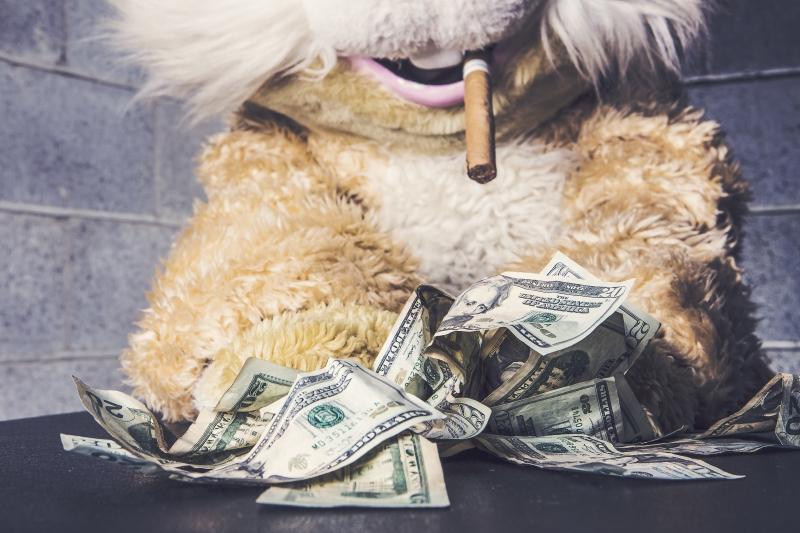 Cash bunny image