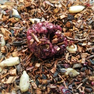 Blackberry Hazelnut from 52teas