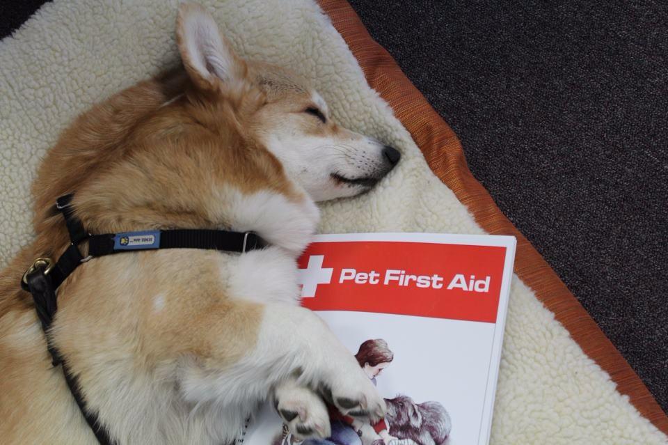 Walks N Wags Pet First Aid Walks N Wags Pet