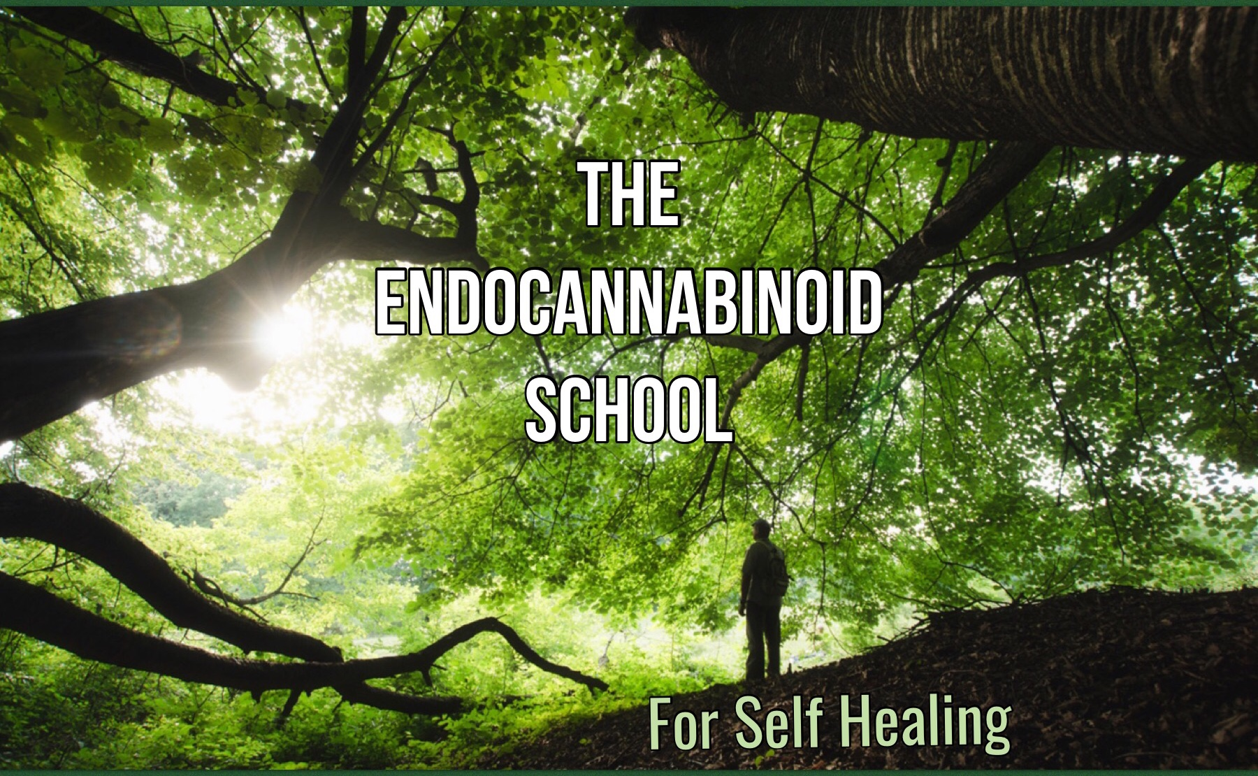 The Beginers  Guide to Heal Through The Endocannabanoid System
