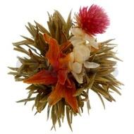 """Bai He Xian Zi """"Divine Lily"""" from Oxalis"""