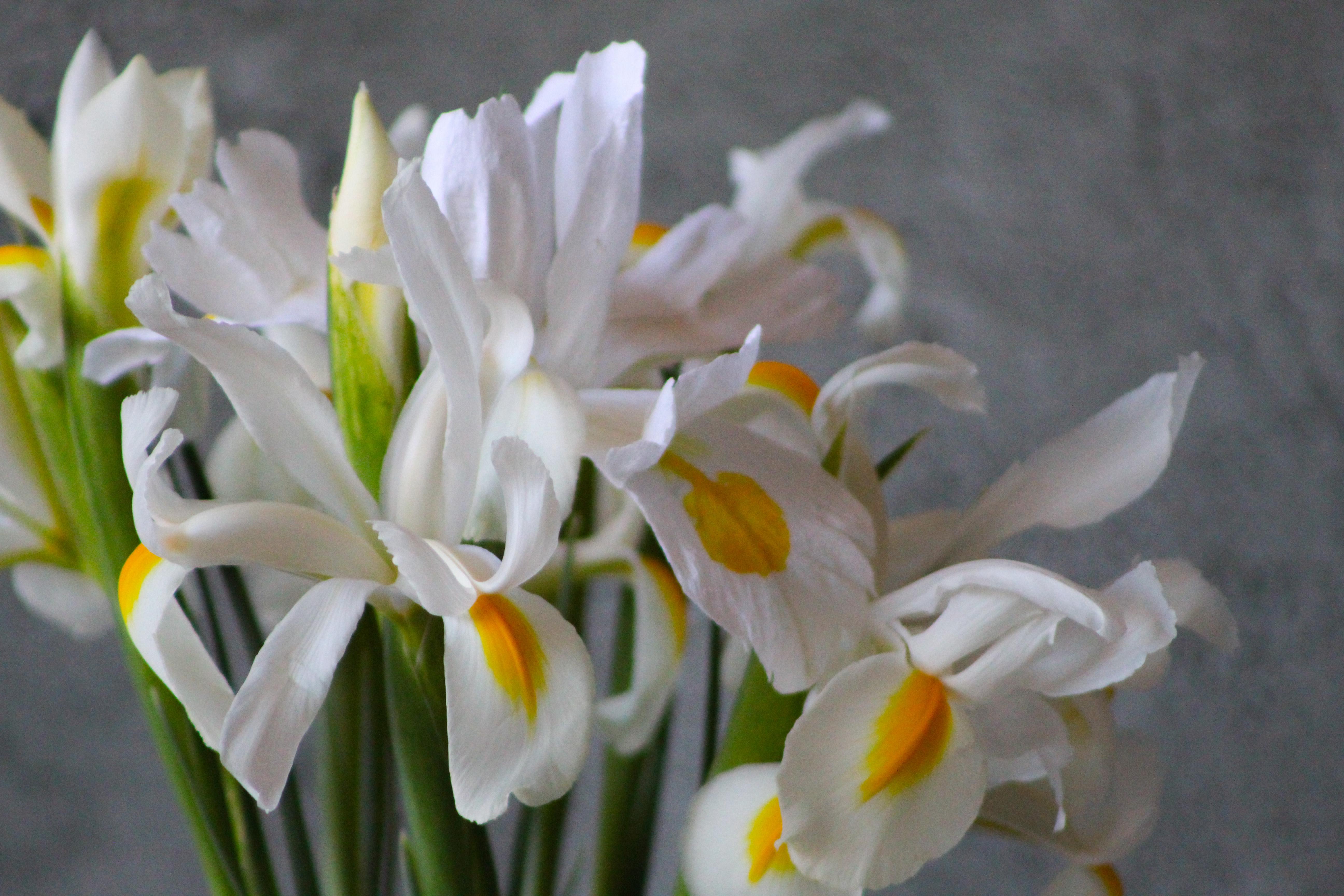Crepe Paper Iris mixed with real Iris