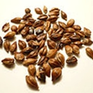 Mugicha (Roasted Barley) from Premium Steap