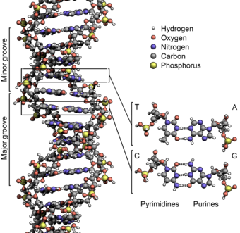 DNA Research Web Page- Hawaii School of True Science Academy