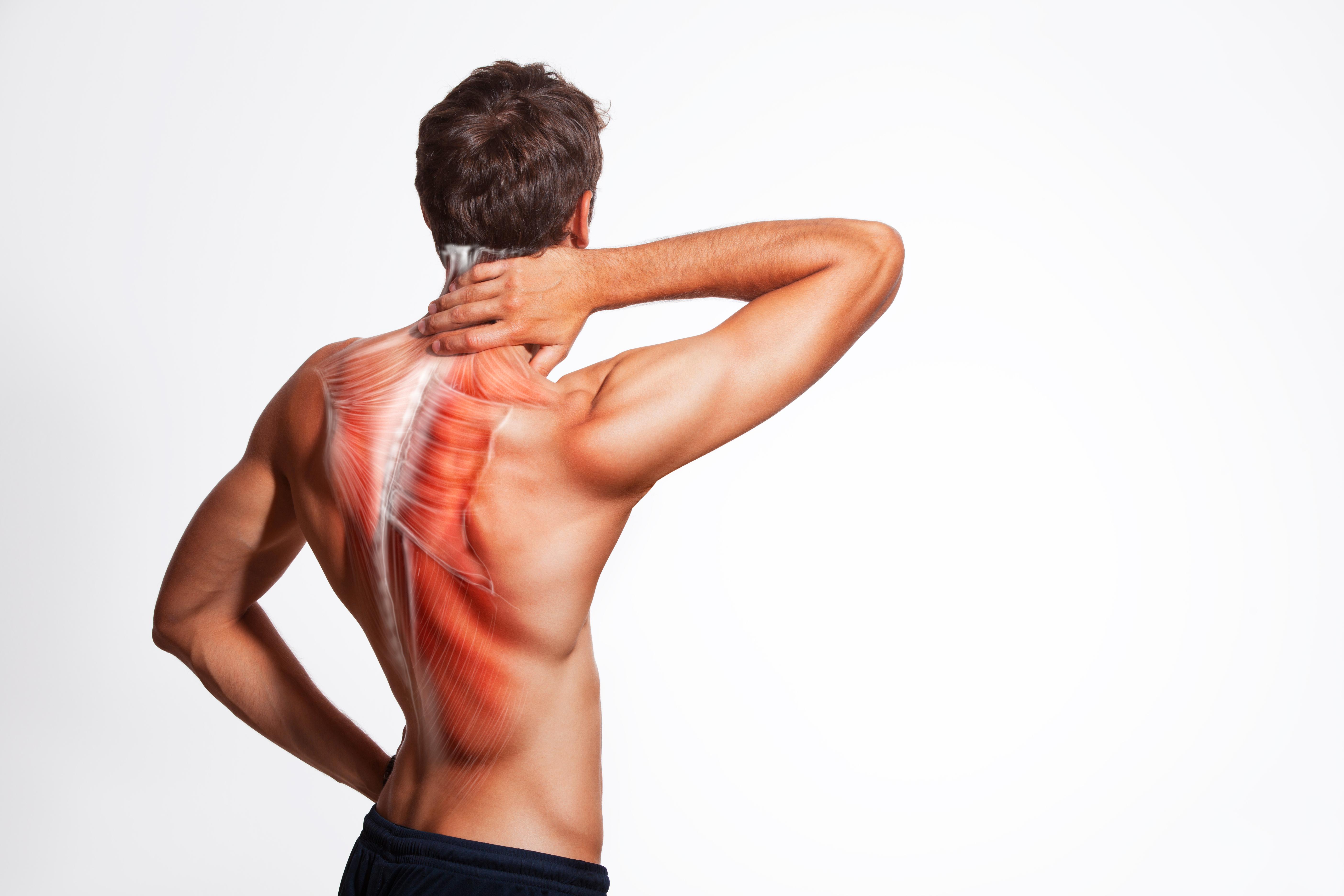 Hip, Pelvic, and Spinal Anatomy
