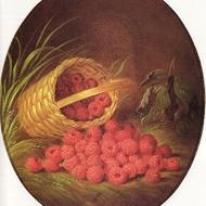 Chocolate Raspberry Honeybush from Adagio Teas Custom Blends