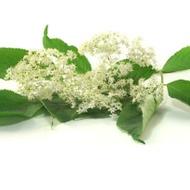 Elder Flowers from The Tea Haus