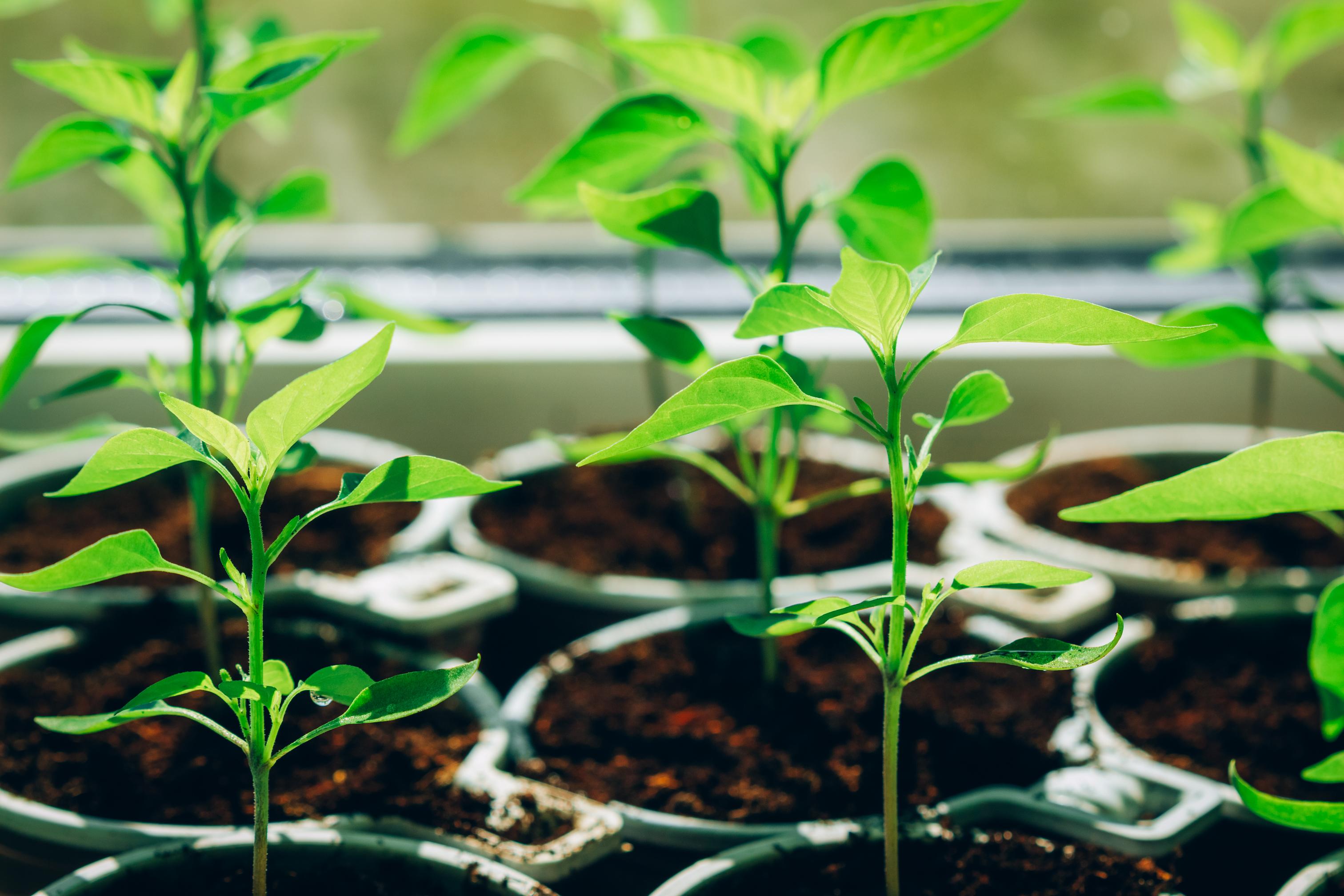 Organic Gardening Online Course