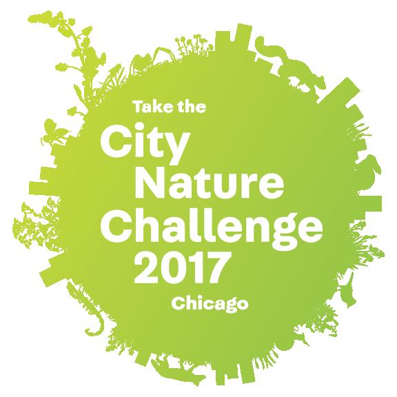 City Nature Challenge 2017: Chicago