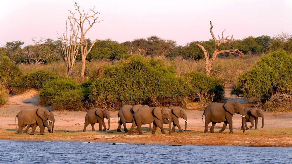 From Wildlife to Village Life: An Experiential Guide to Chobe, Botswana