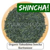 Organic Yakushima Sencha Kuritawase from Yuuki-cha