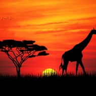 african dusk from The Devotea