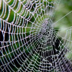வலையிருந்தும் மீன் பிடிக்க முடியாது… KHci493nRTSkfy7Yvgrq+spiders-web