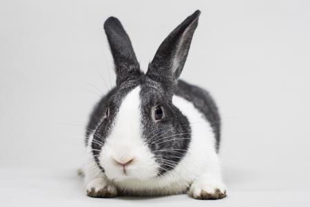Whole Foods Rabbit Boycott