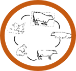 Understand life cycle of animals in your dairy farm. Be successful in dairy farming