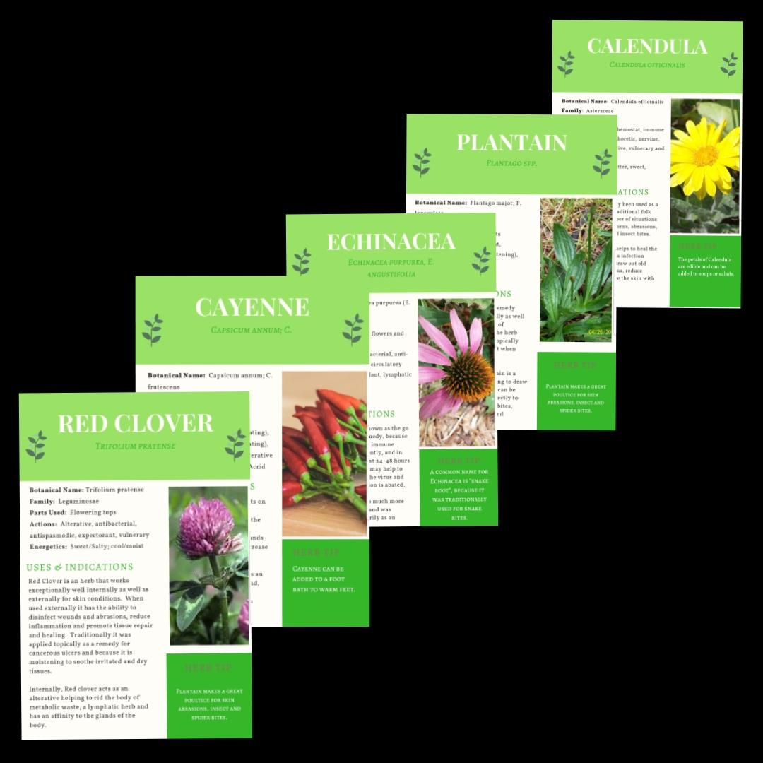 50 MEDICINAL PLANT PROFILES