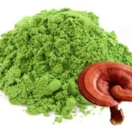 Reishi Matcha from Matcha Outlet