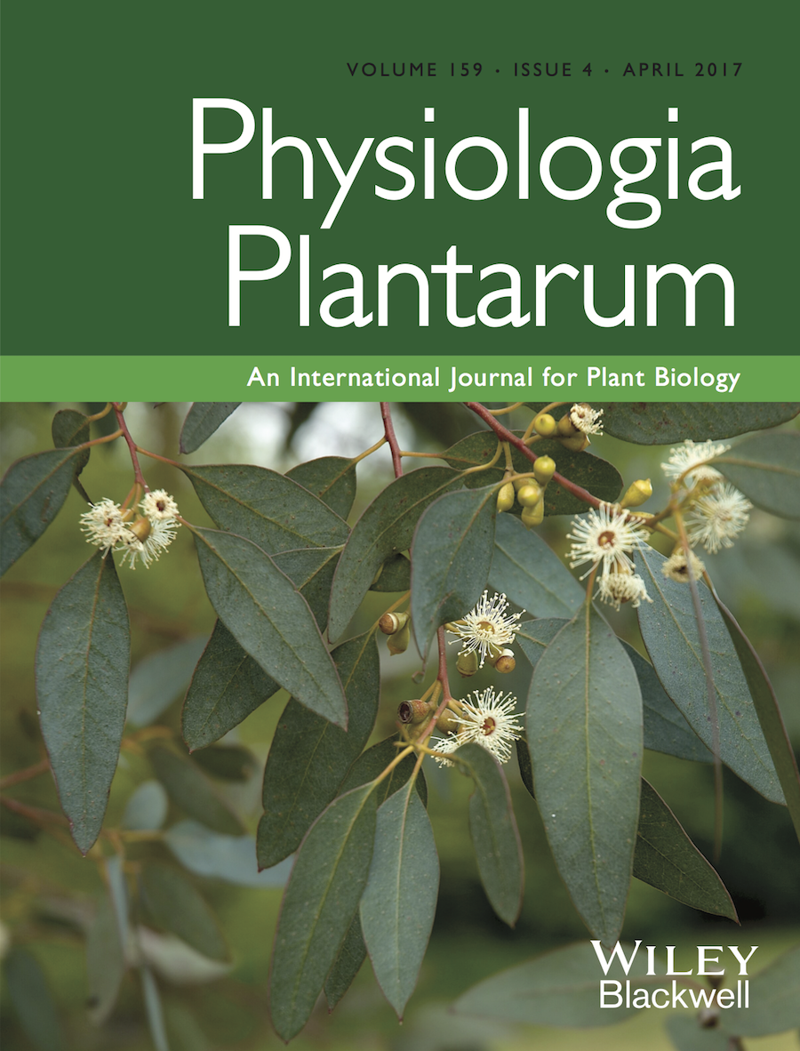 Template for submissions to Physiologia Plantarum