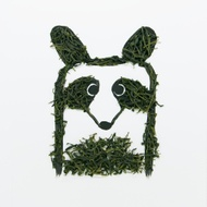 Big Raccoon - Korean Green Tea Daejak from teabento