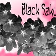 Black Sakura from Custom-Adagio Teas