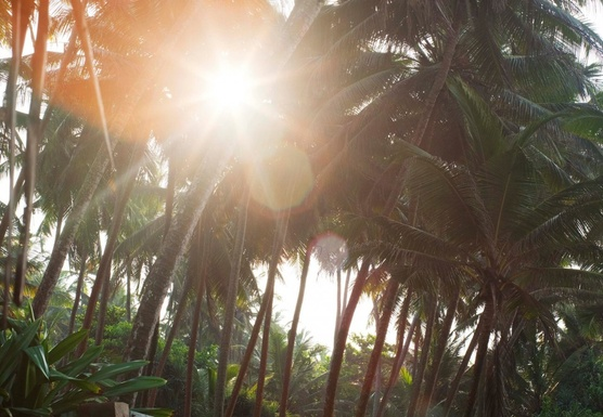 Yoga Retreat Sri Lanka - Reaching up High