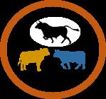 Inbreeding in cows buffaloes