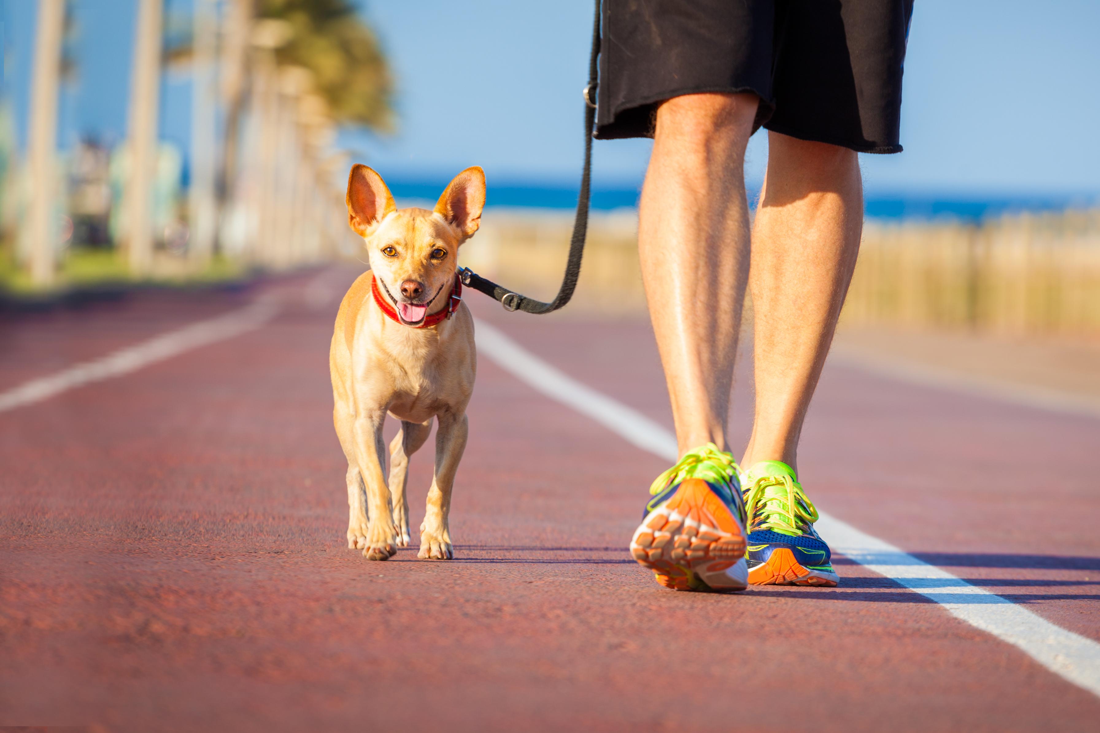 1) Båndtrening | Lahaugmoen Hundesenter