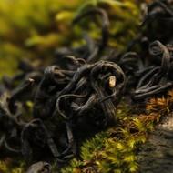 Laoshan Black from Verdant Tea