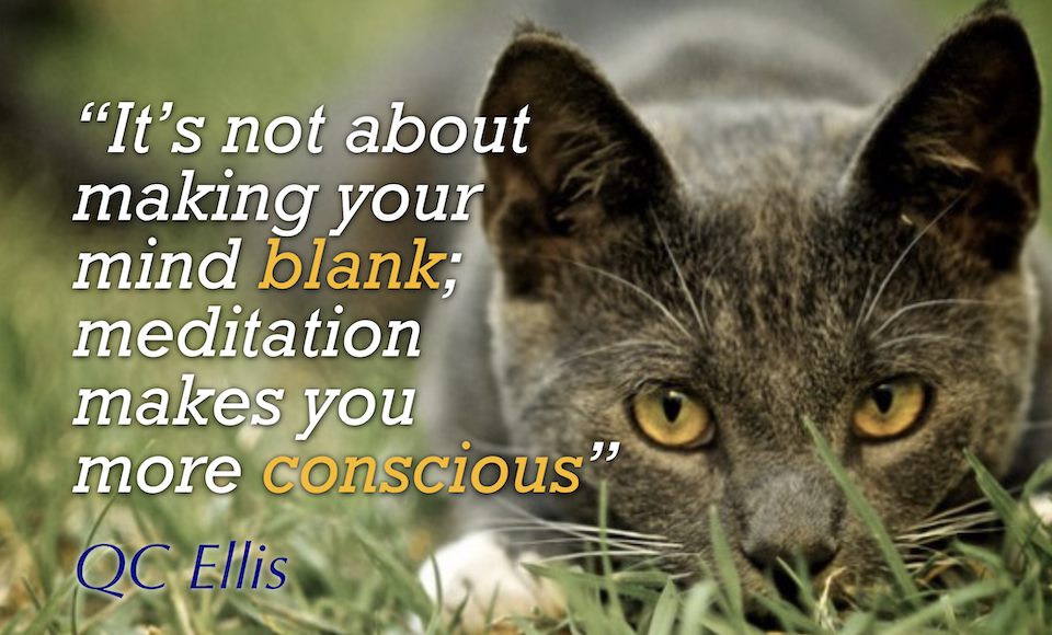 "photo of alert cat with a quote by QC Ellis, ""It's not about making your mind blank; meditation makes you more conscious"