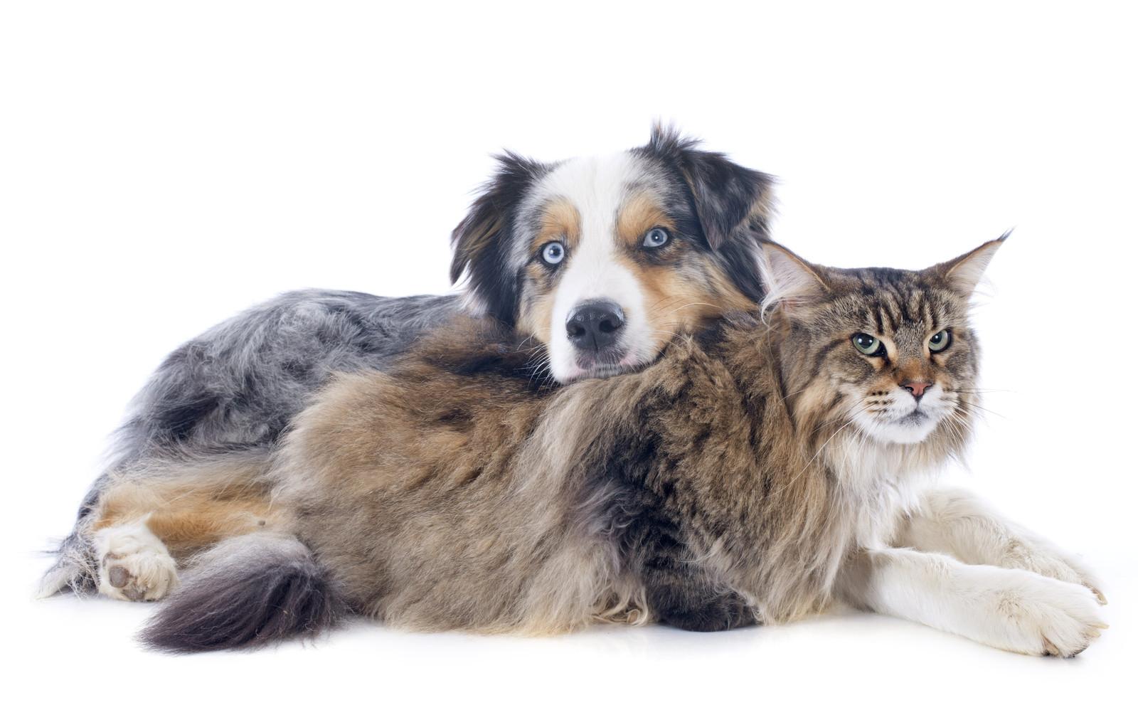 DogNostics Fostering Collaborative Care