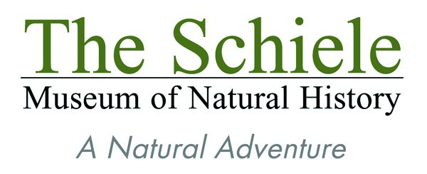 Internship at The Schiele Museum of Natural History