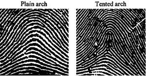 For more information please visit //.fingerprinting.com/fingerprint -patterns.  sc 1 st  Forensic Training Unlimited - Teachable & Forensic Training Unlimited | Arches--Fingerprint Pattern