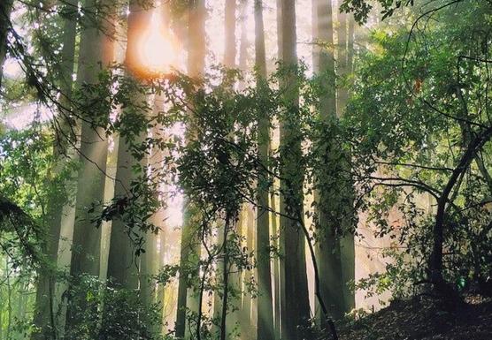 RELAX - LET GO - RECONNECT A Vinyasa Yoga & Mindfulness Meditation Retreat