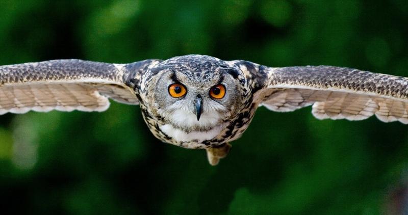 animal-animal-photography-blur-357159 1jpg