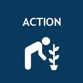 Spark Alumni Ambassador- Action