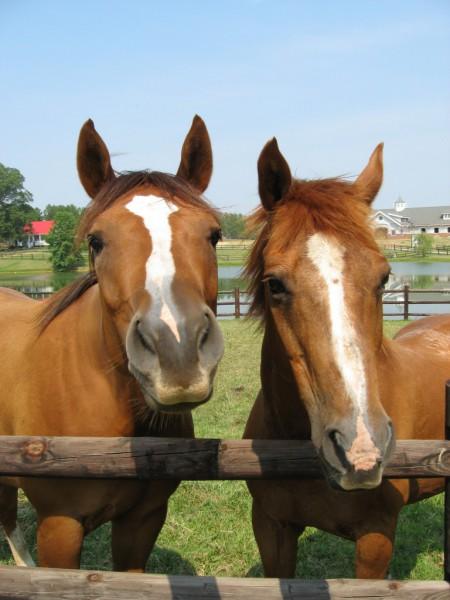 Equine Studies Online | University of Guelph