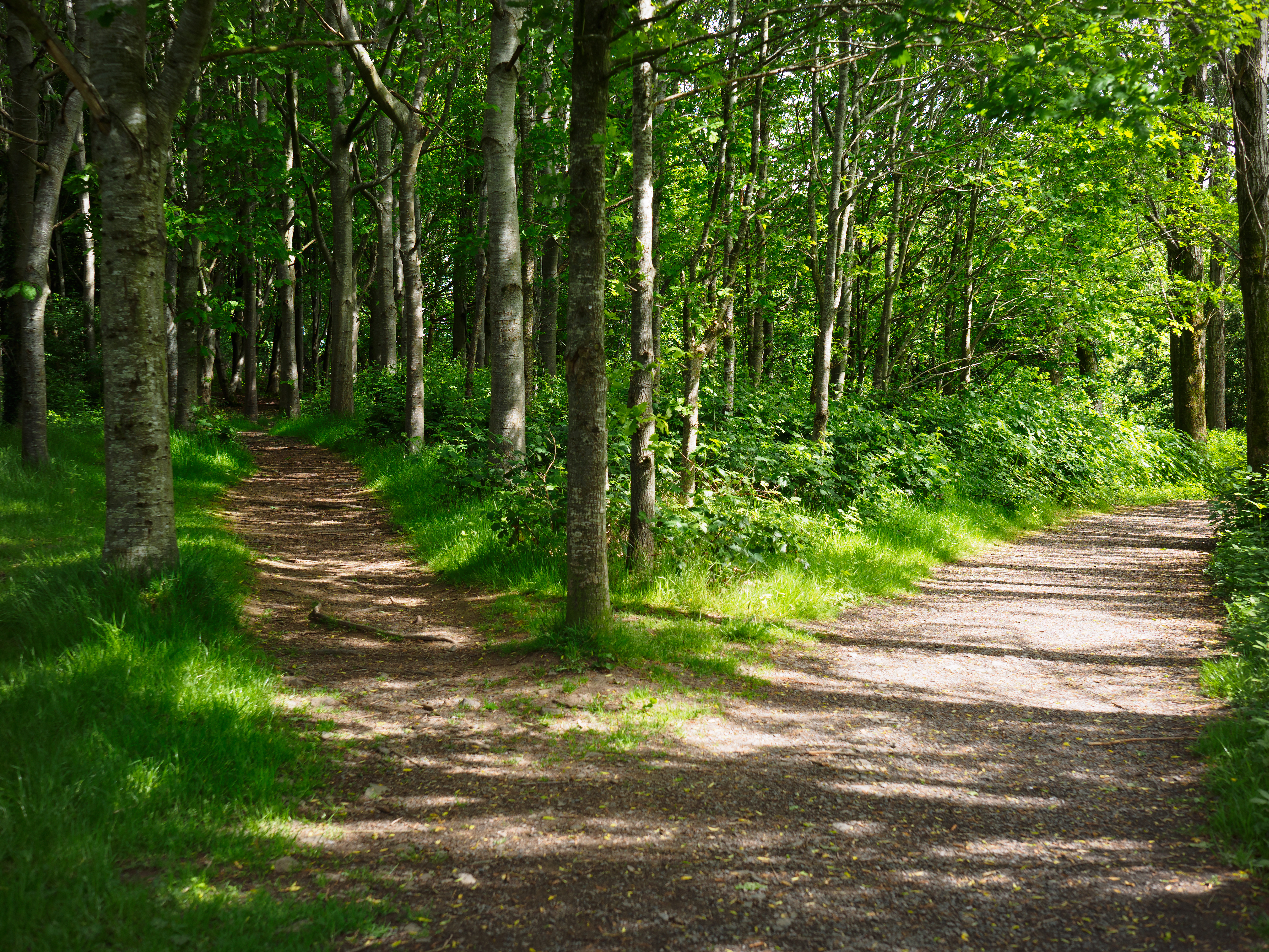 crossroads-finding-your-path-online-yoga-training