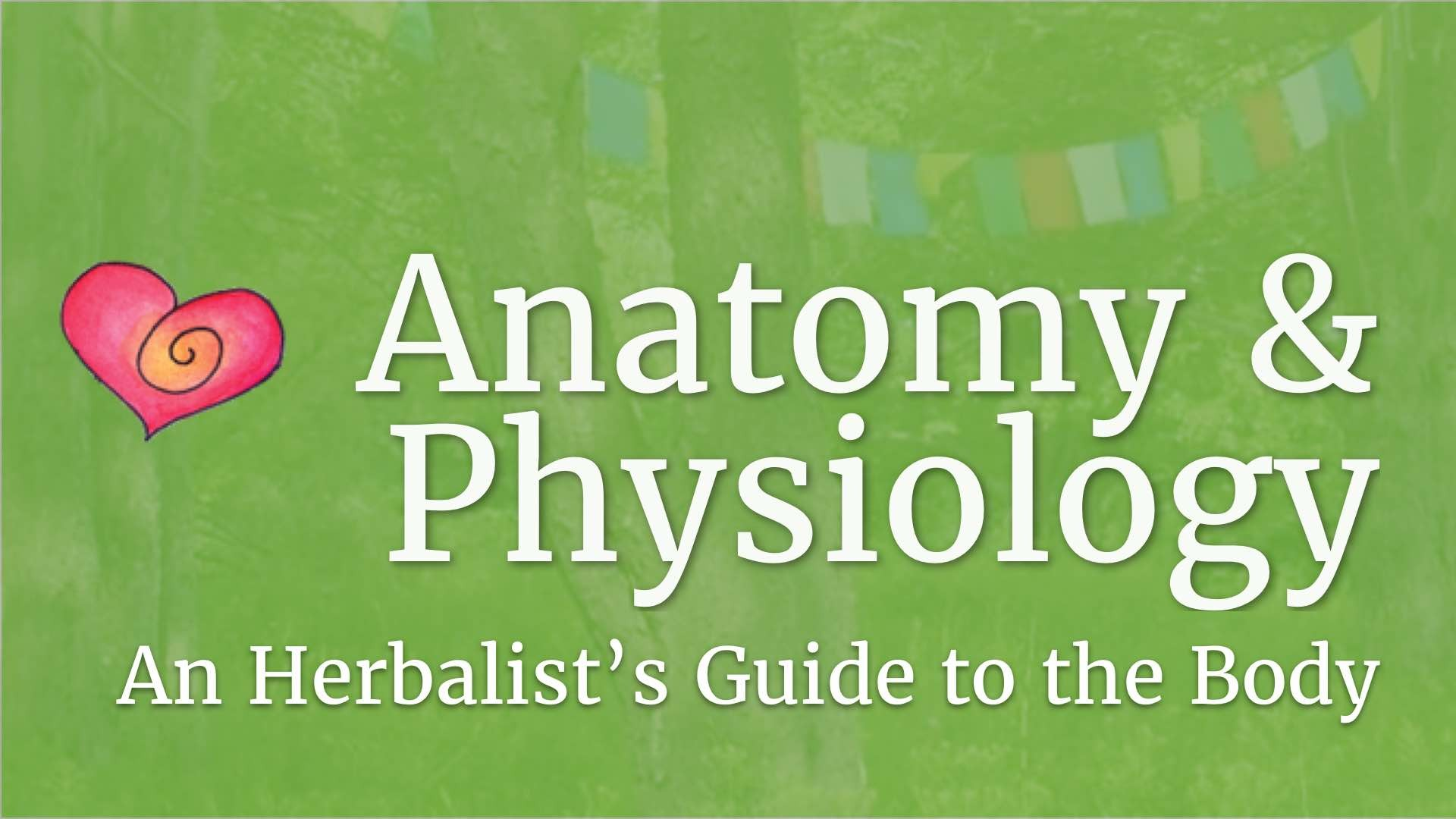 Online Anatomy & Physiology for Herbalists | Heartstone Online